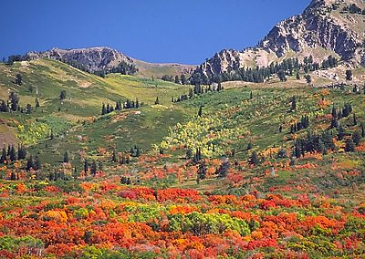 Summer color in the mountains near Trappers Ridge